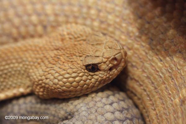 aruba island snake.jpg