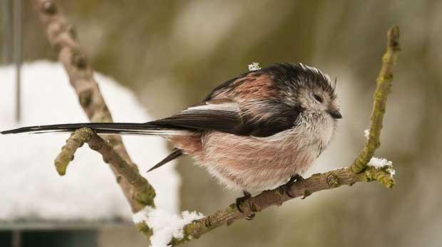 Birds 1.jpg