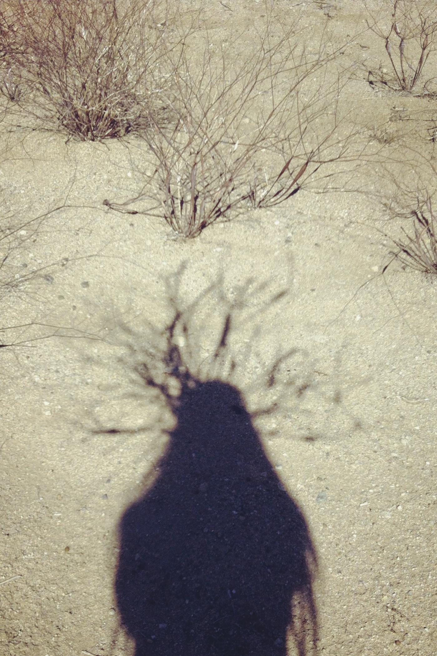 Untitled (Desert Trumpet).jpg