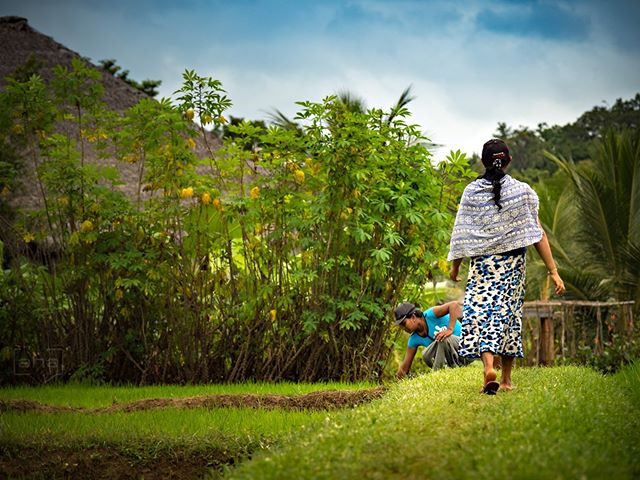 Farmers @ AMUNA - Sri Lanka's authentic ayurvedic retreat center: http://bit.ly/2FviV2g