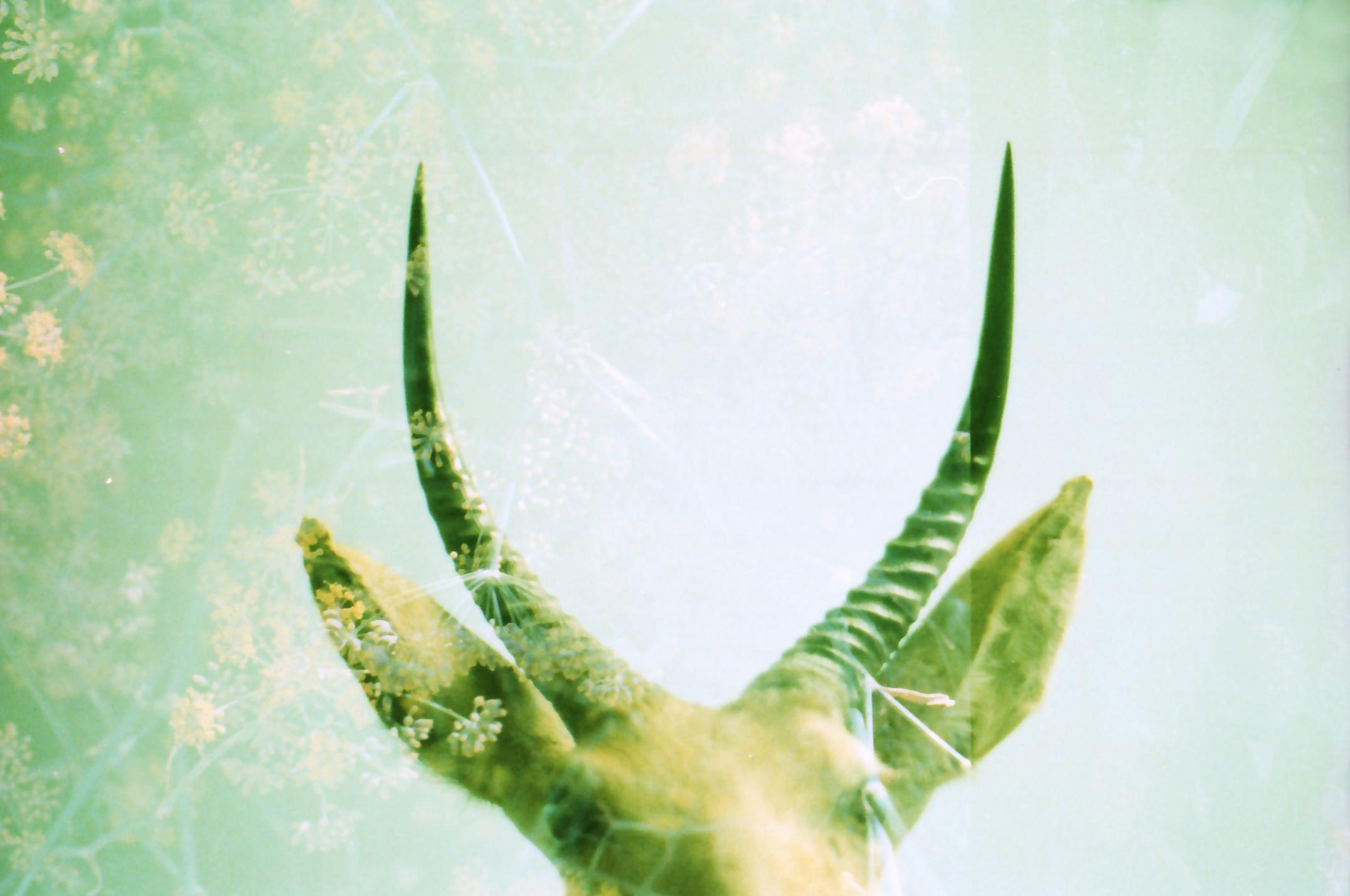antlers02.jpg