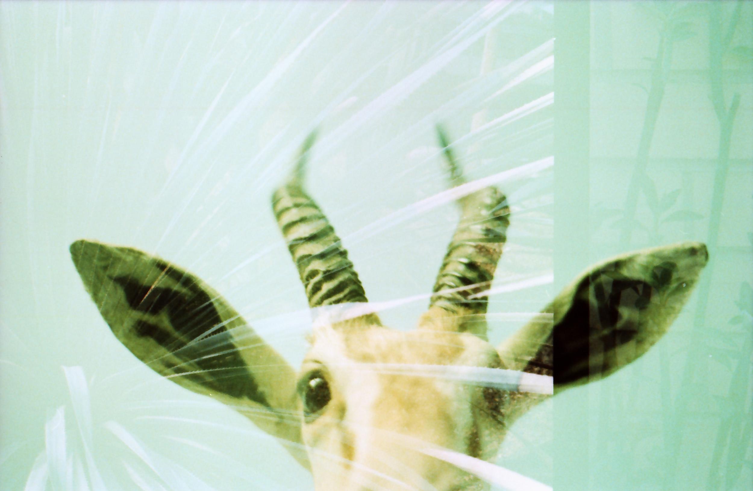 antlers01.jpg