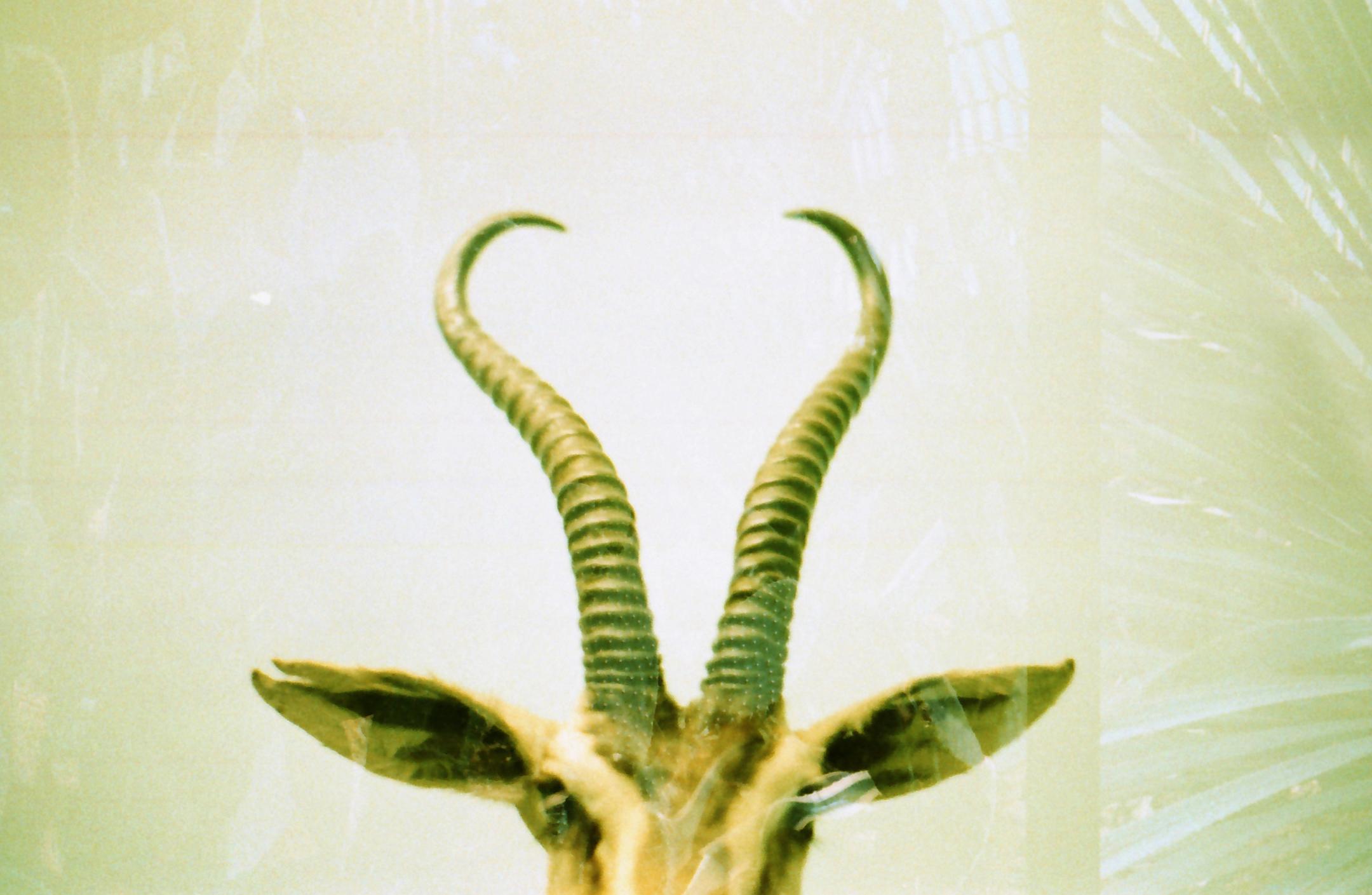 antlers06.jpg