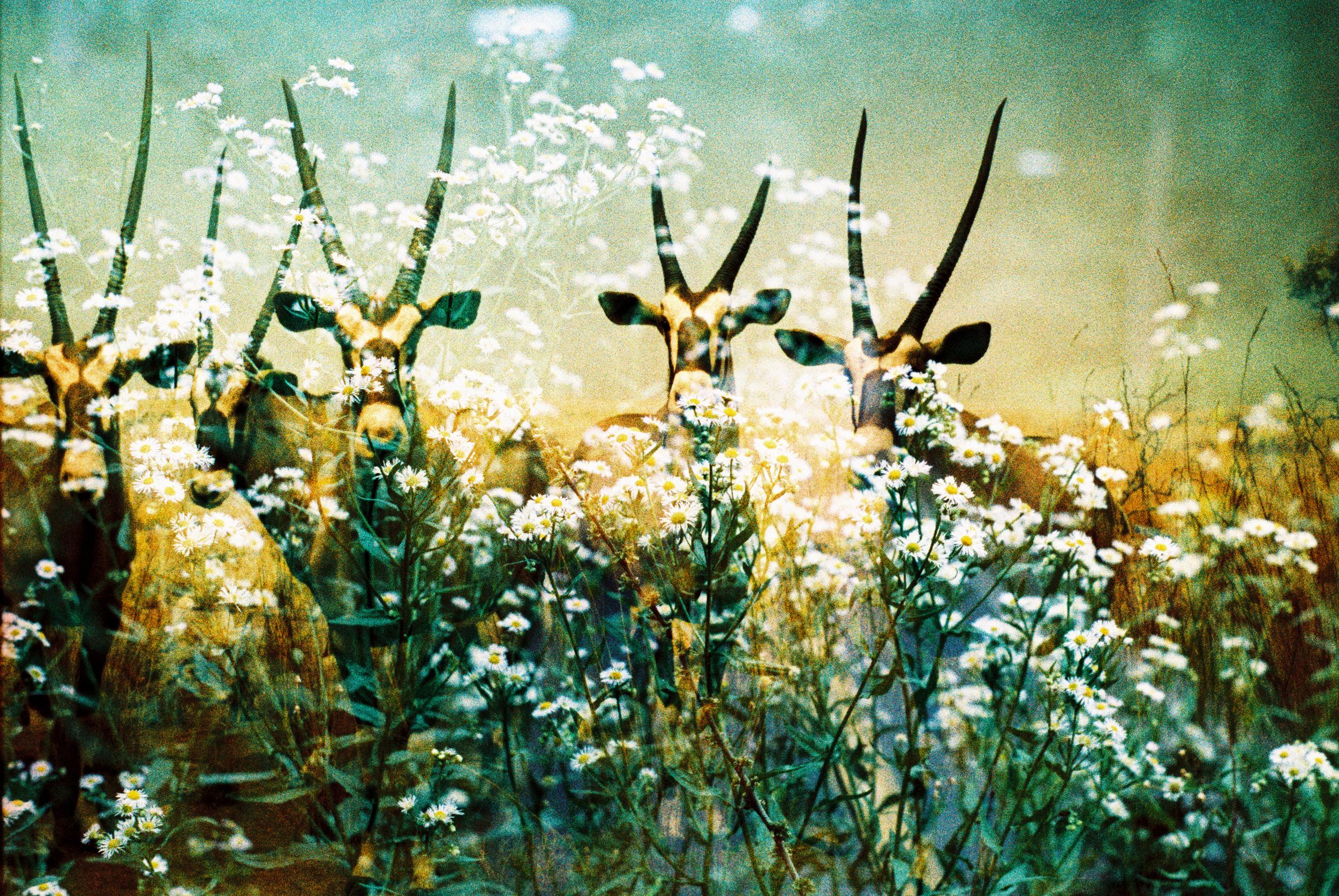 antelope01.jpg
