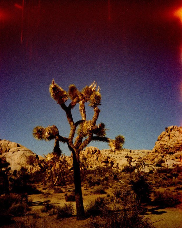 first photo on the roll is always my favorite #lightexposure #analogphotography #analog #analogue #film #filmphotography #lomo #lomolca #lomography #joshuatree #joshuatreenps #joshuatreenationalpark #neverstopexploring #exploremore #ladyadventures #natureyo #worldtraveler #filmsnotdead #analogcalifornia #crossprocess #slidefilm