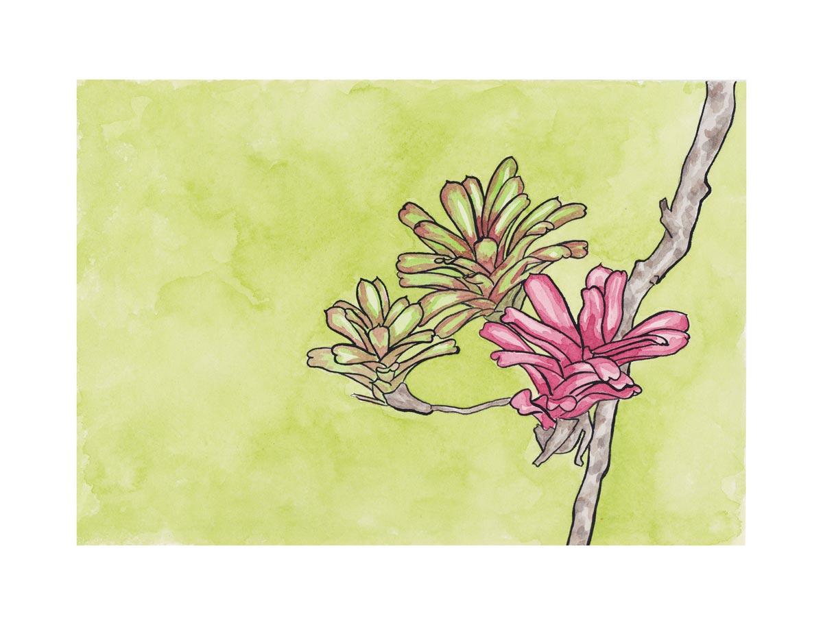 Bromélia . Acrylic ink. 2017.