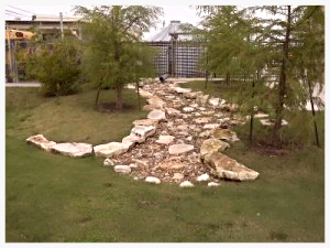 Dry_Creek_Austin_Landscaping_Lawn