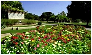 Flower_Bed_Renovations_Austin_Texas