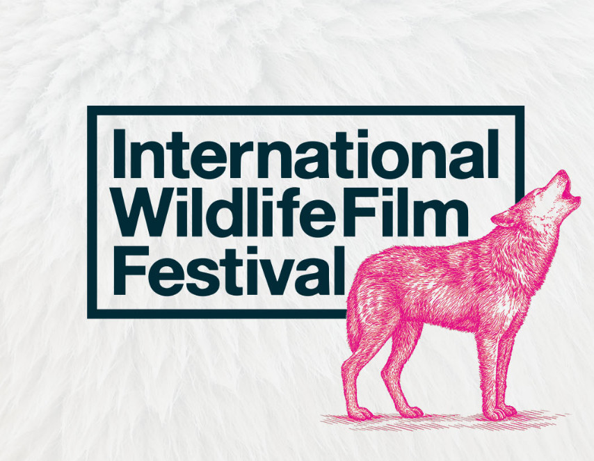 courtesy of the International Wildlife Film Festival