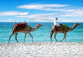 camels on beach.jpg