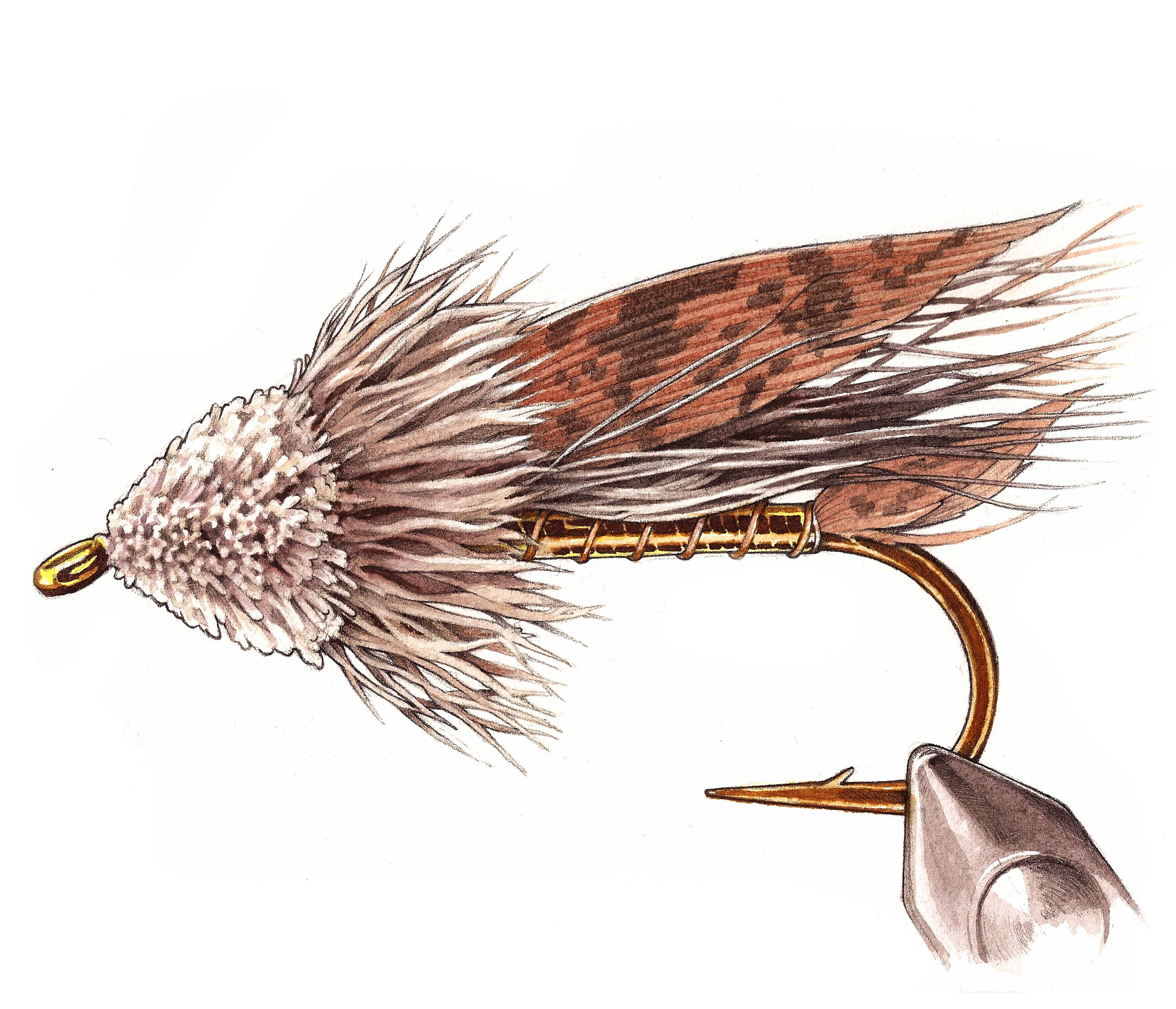 Muddler Minnow  | Pen and Watercolor