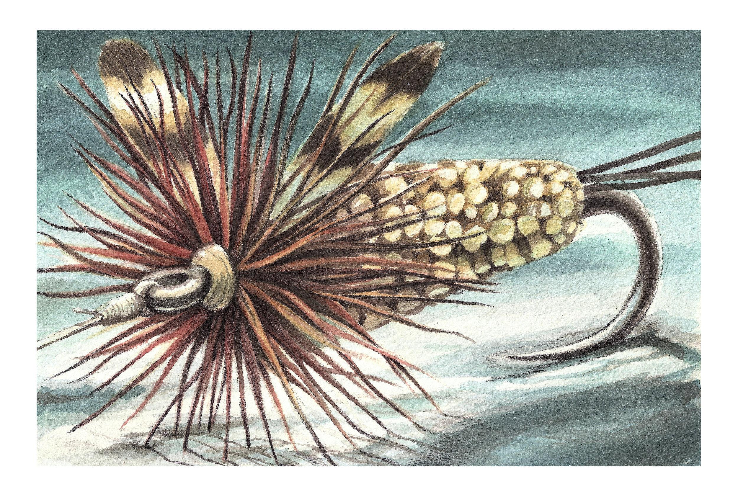 Adams Irrestible  | Watercolor and Pen