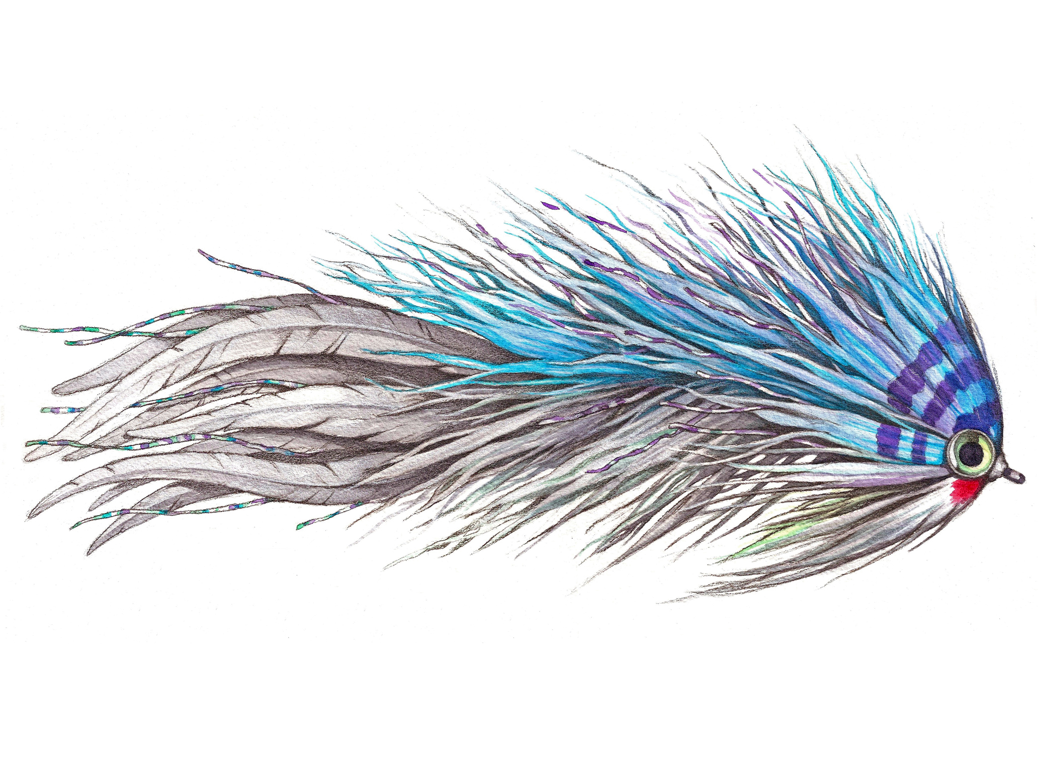 Devil Dancer Fly  tied by Matt Grajewski   | Watercolor and Pen