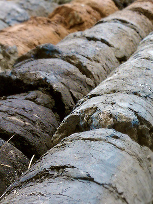 soilsamples