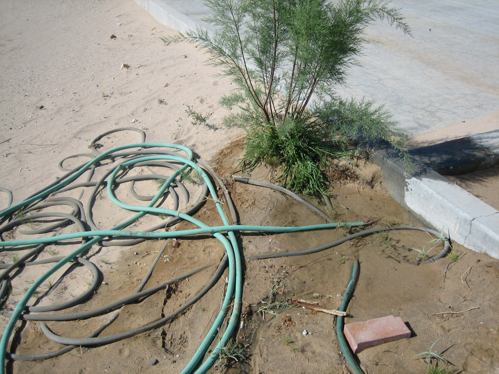 Hose Laying in Mud Next to Washrack without Protection