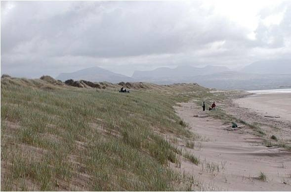 Photo of coastal grass dunes and a sand beach.