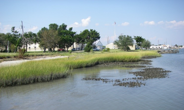 Living shorelines minimize the effects of erosion. ( Photo Credit: NOAA)