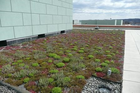 Vegetated roofs can help manage stormwater on-site. (Photo Credit: USEPA)