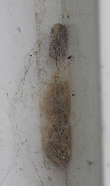 spider nest_2269.jpg