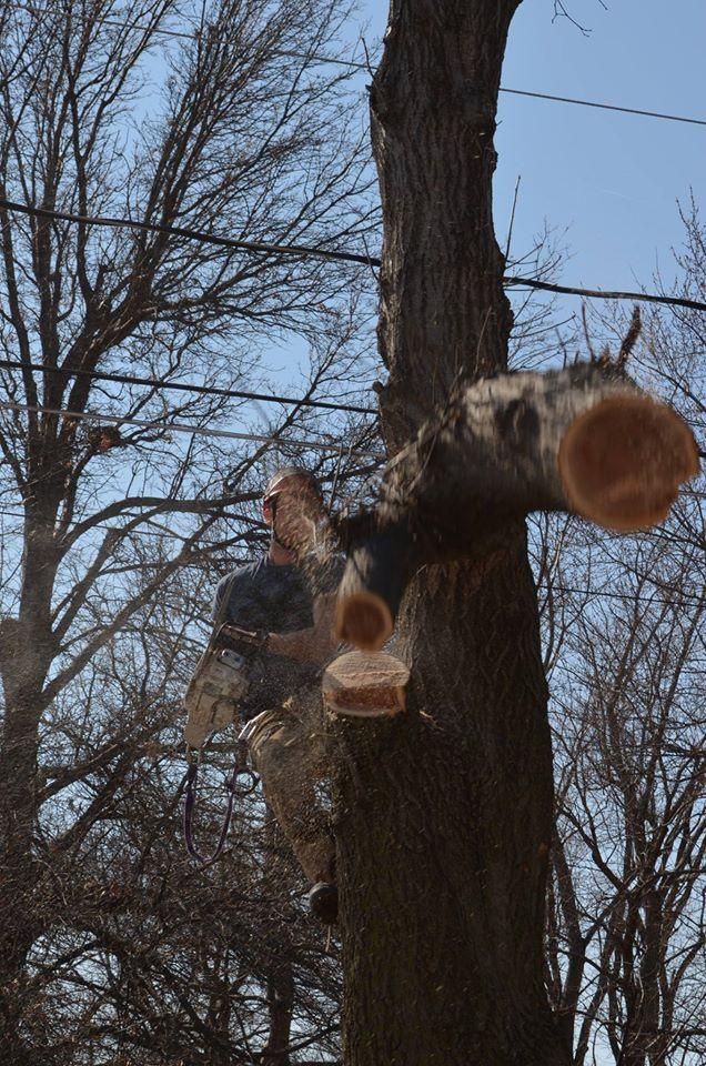 arborist lincoln tree service.jpg