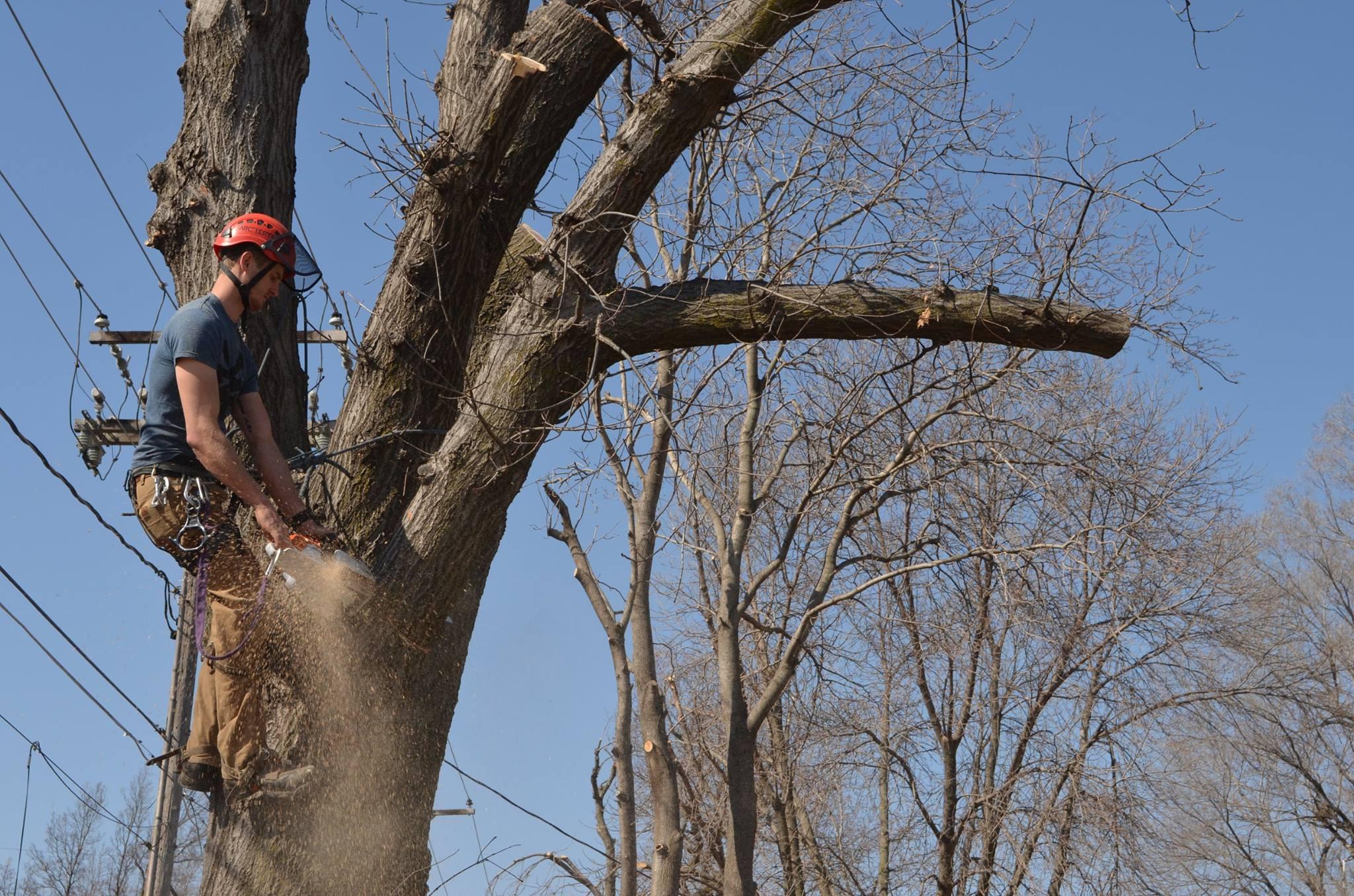 tree service lincoln nebraska arborist.jpg