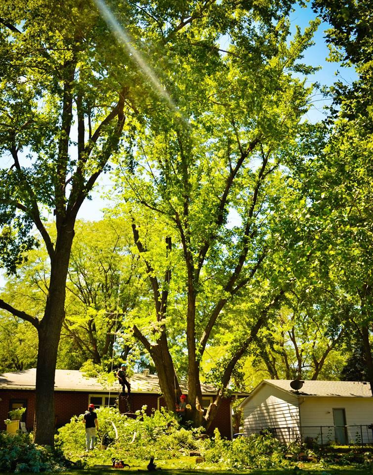 tree service, lincoln ne 55.jpg