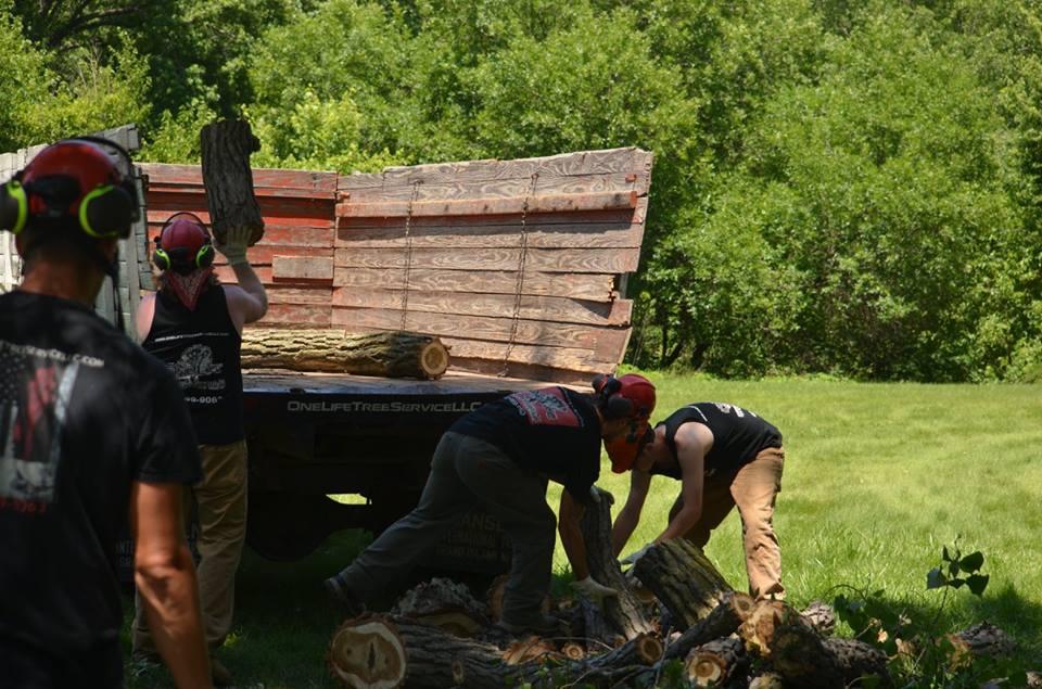tree service lincoln arborist service 17.jpg