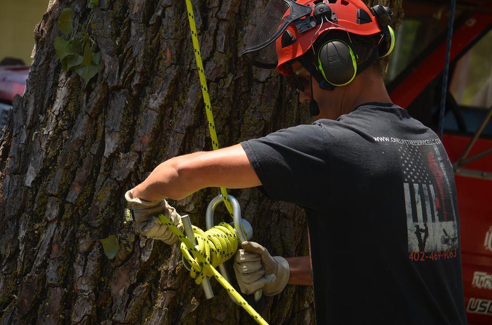 tree service lincoln arborist service 19.jpg