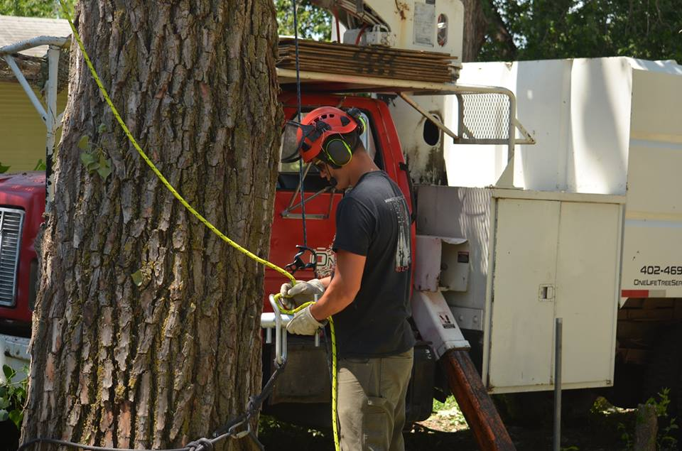 tree service lincoln arborist service 18.jpg
