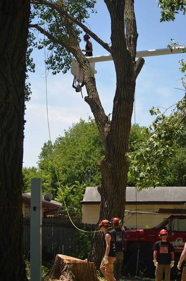 tree service lincoln arborist service 1111.jpg