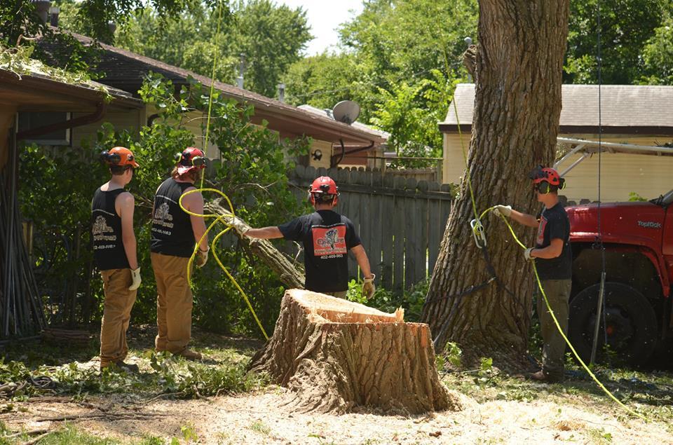 tree service lincoln arborist service 1333.jpg