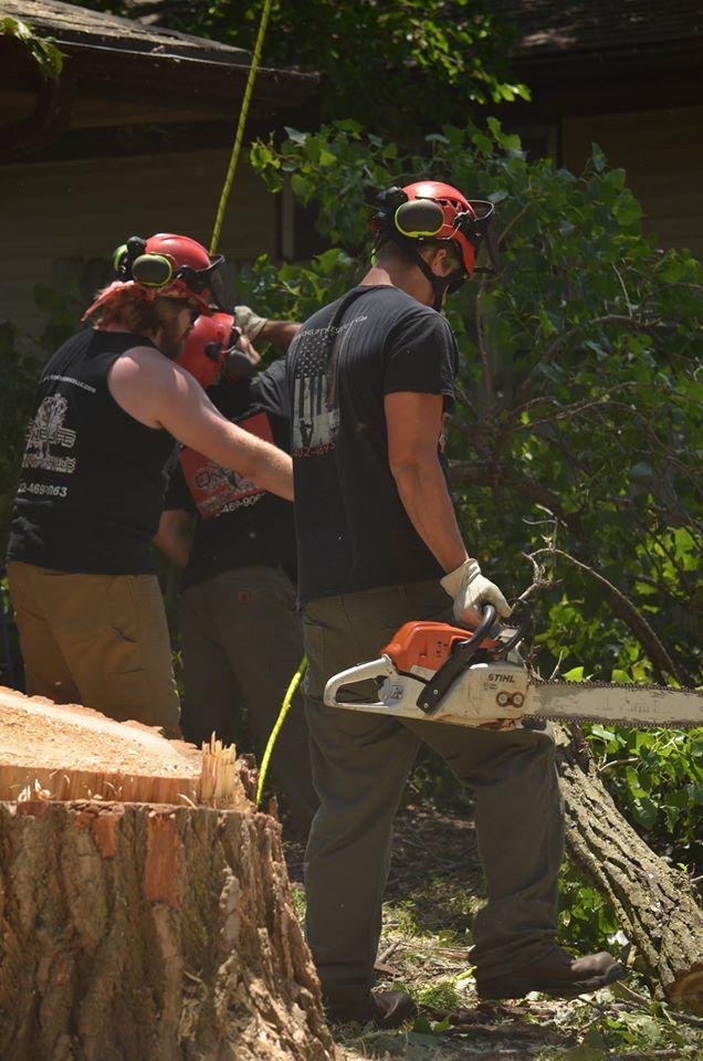 tree service lincoln arborist service 1555.jpg