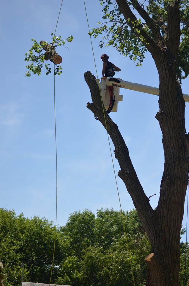tree service lincoln arborist service 1567.jpg