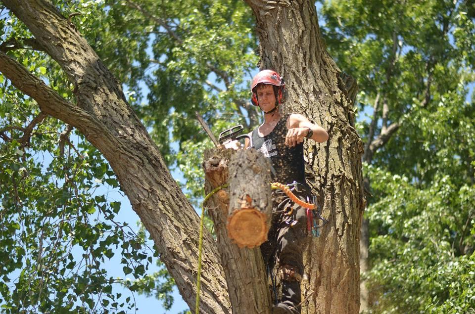 tree service lincoln arborist service 15677.jpg