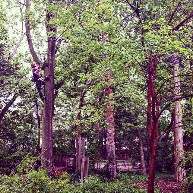 One Life Tree Service Amon Vanderlinden8.jpg