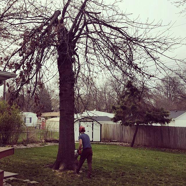 One Life Tree Service Amon Vanderlinden13.jpg
