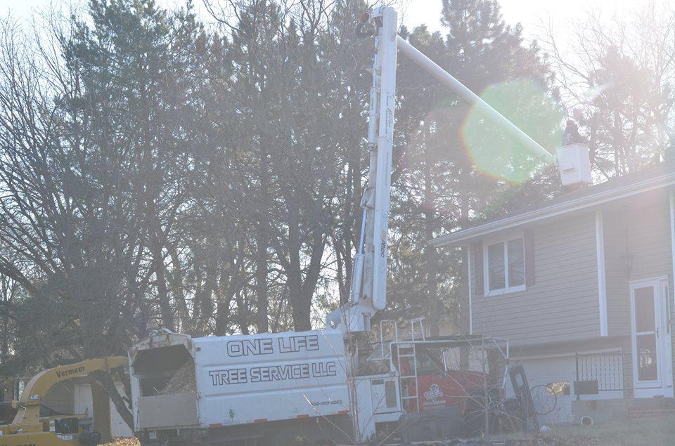 tree service lincoln ne  5.jpg