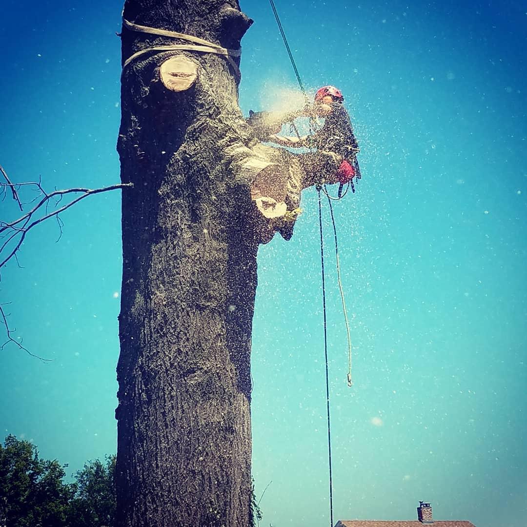 One Life Tree Service, Lincoln Nebraska, Arborist 2.jpg