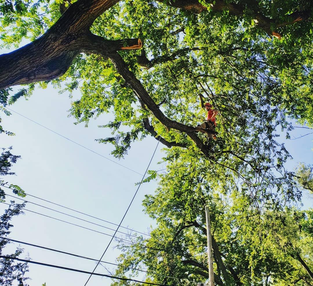 One Life Tree Service, Lincoln Nebraska, Arborist 5.jpg