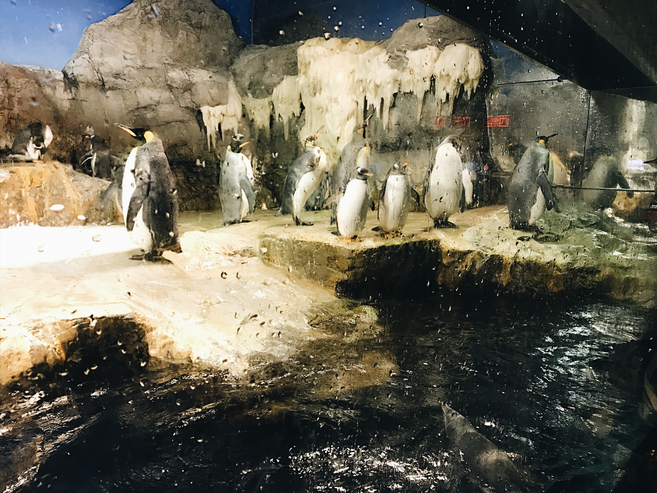 Did you guys know I love penguins? I do.