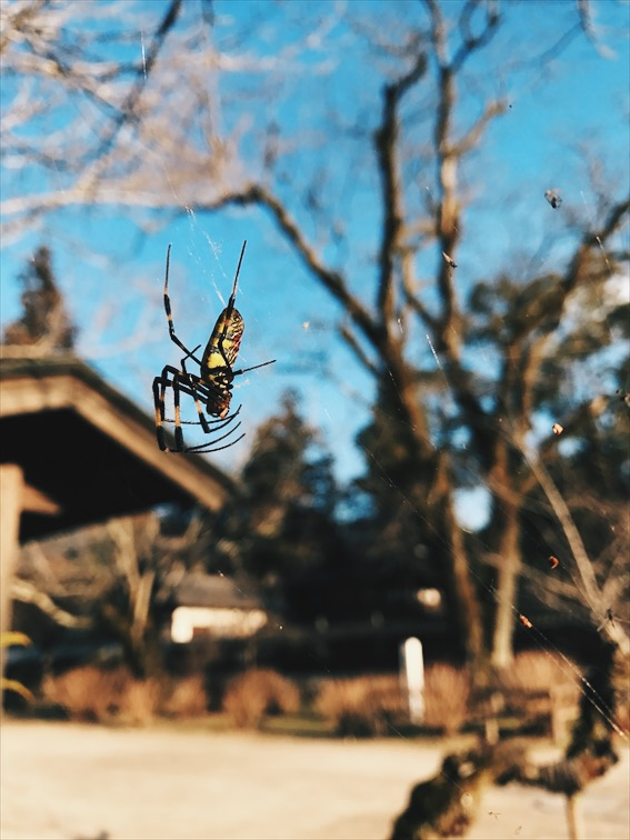 First spider I ever seen in Japan and I was super excited about it. FYI I love spiders!