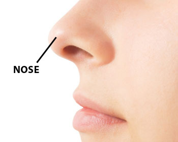 It's a nose... but you knew that anyway