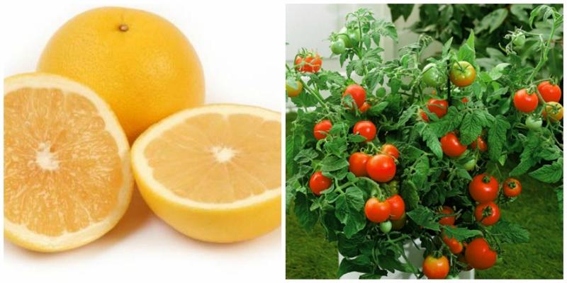 grapefruit and tomato plant