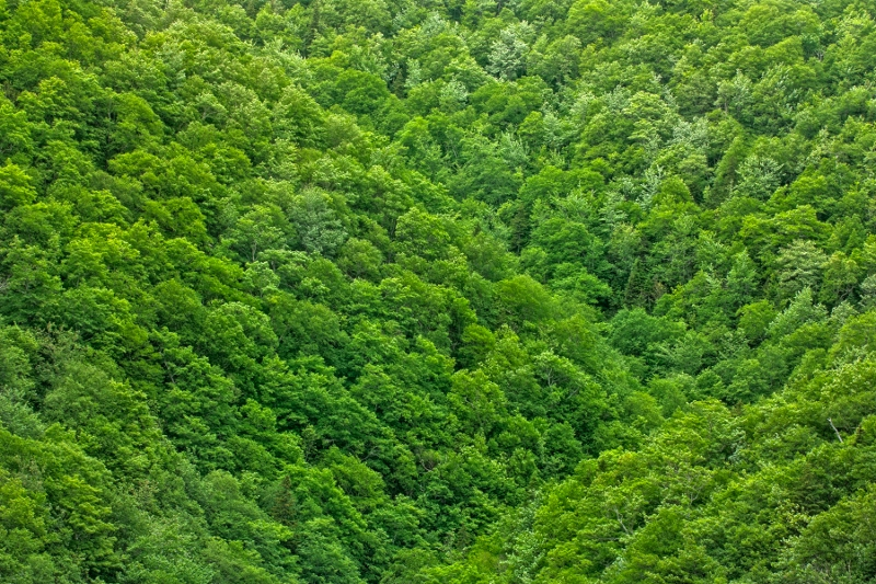 Yep, it's definitely green foliage...