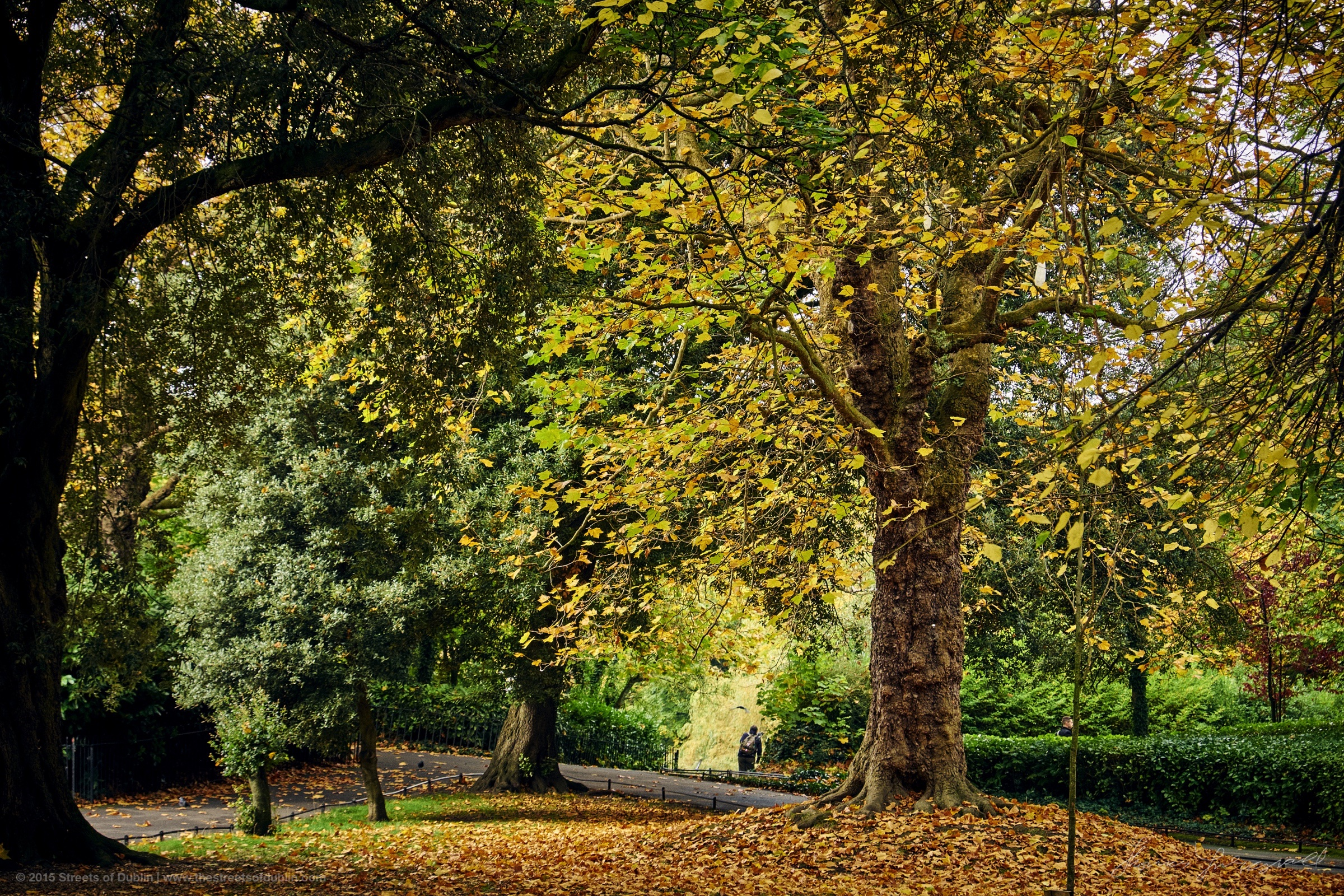 Stephens-Green-Trees.jpg