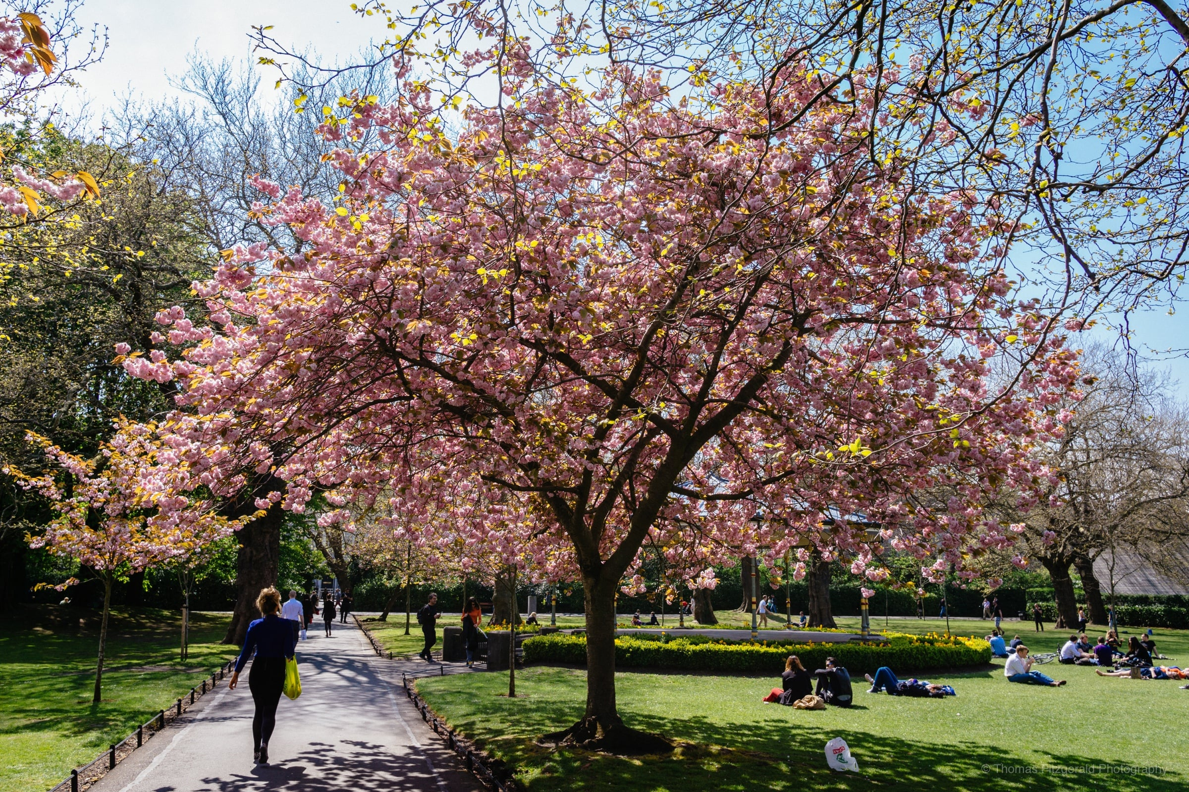Spring in St. Stephen's Green