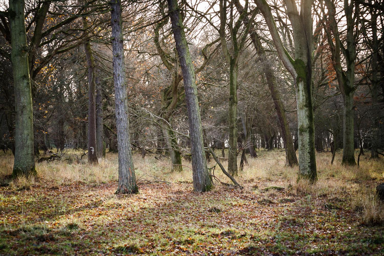 Trees in the Phoenix Park in Dublin