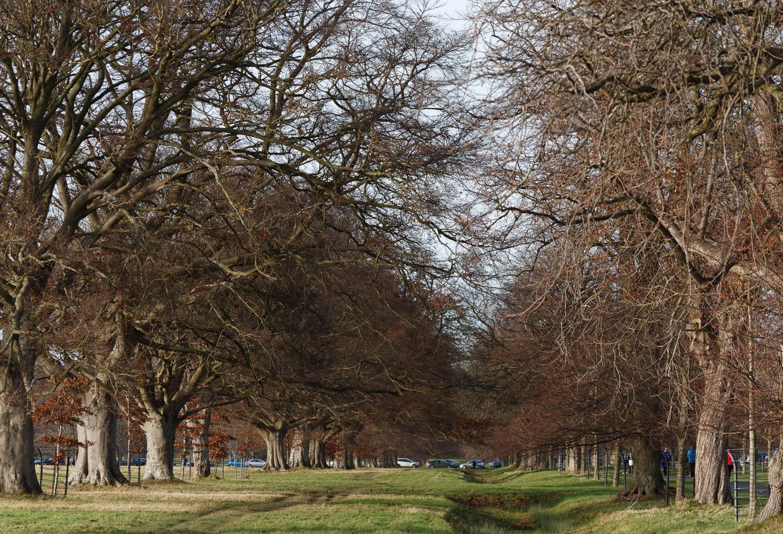 Phoenix Park in Dublin