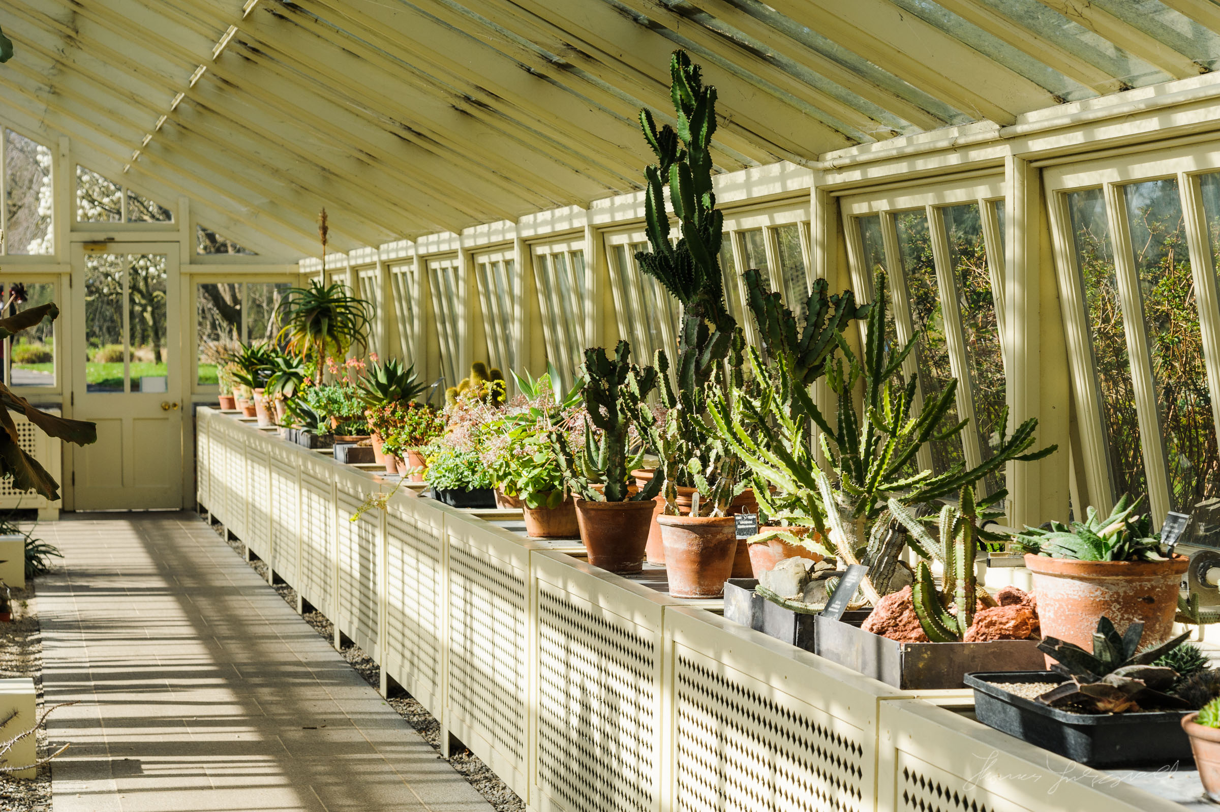Inside the Ornate Greenhouses at the Botanic Gardens