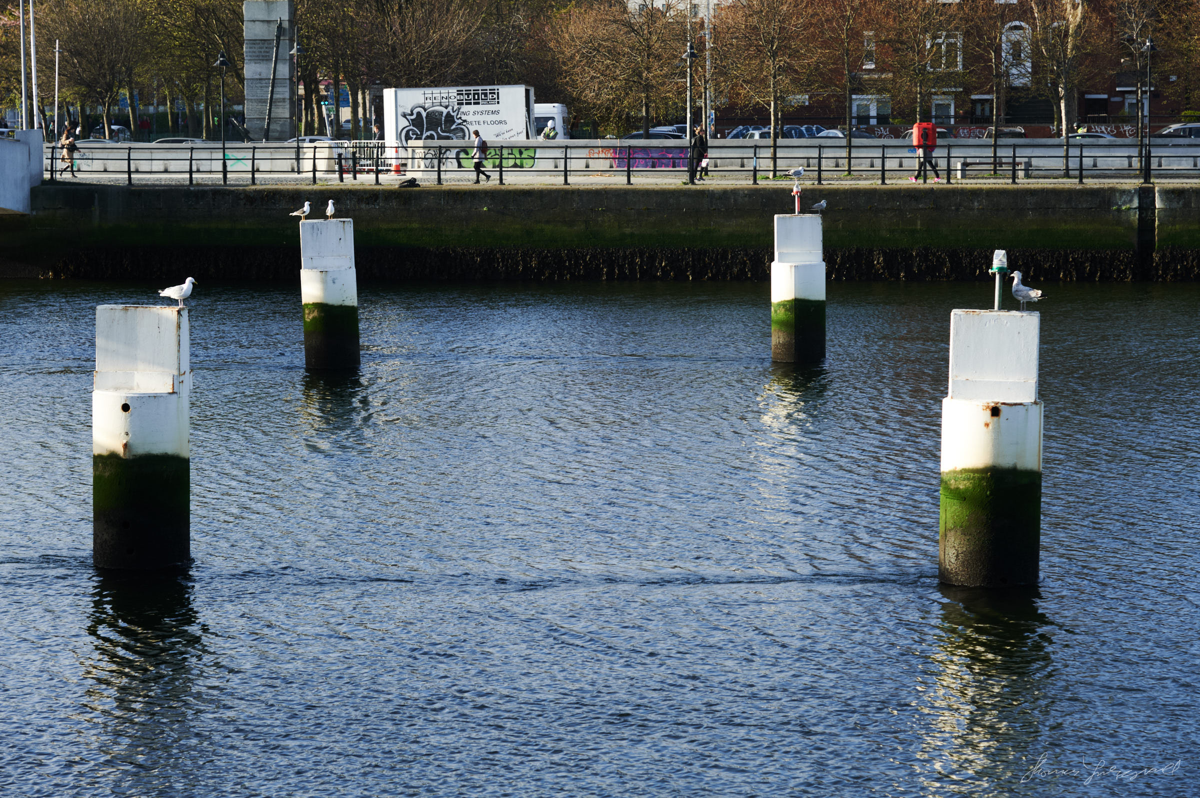 Seagulls on posts in the Liffey